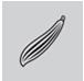 Straight Peeler (Fixed Blade)